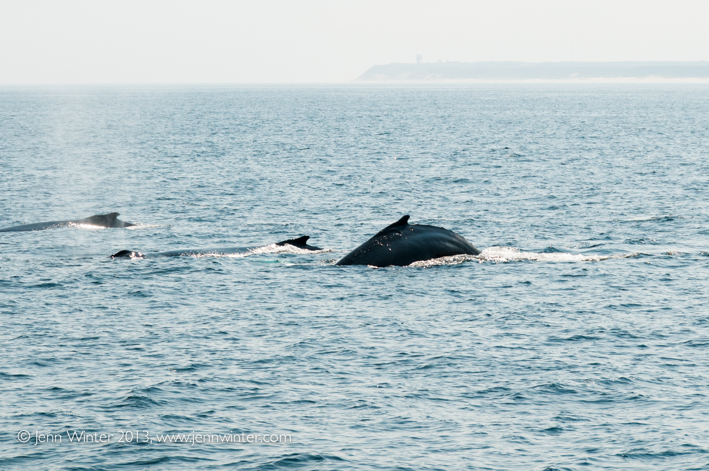Guaranteed Whale Sightings! In the rare event Capt. Bill and Sons Whale Watch tour not see any whales, passengers will receive a complimentary Whale Watch ticket to use at a future time.