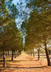 A picturesque tree-lined path at La Vinyeta.
