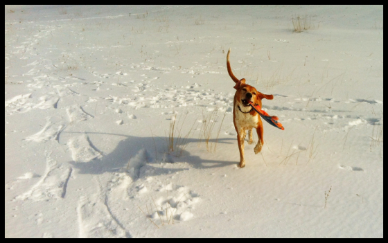 Snowshoeing with Essie on the beach. She found a frisbee buried in the snow.