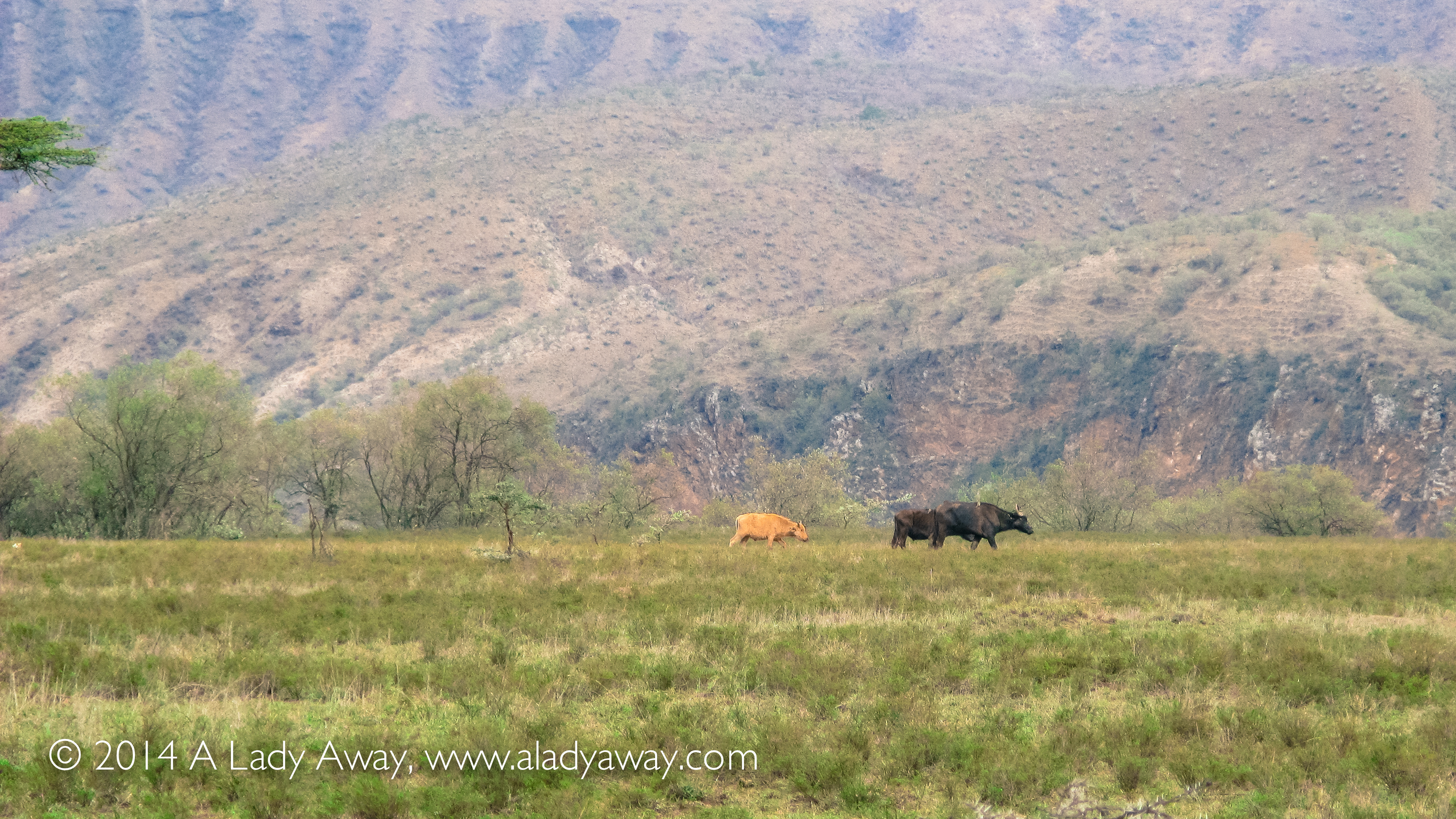 How To Tour Nakuru National Park Without A Car
