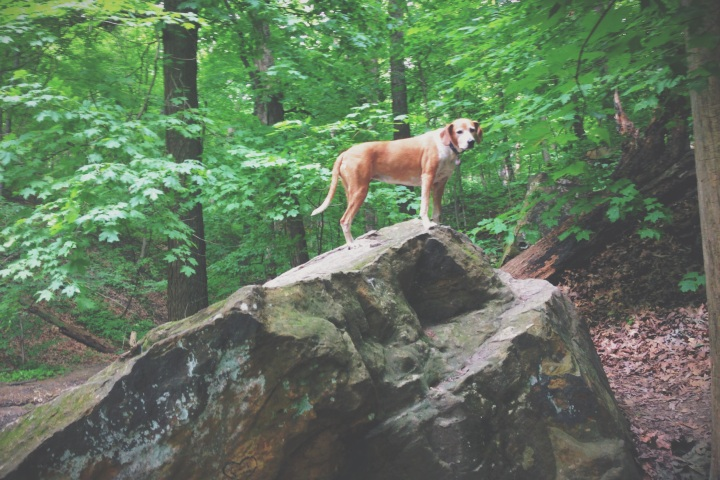 Essie pretends to Maddie from Maddie on Things at Matthiessen State Park.